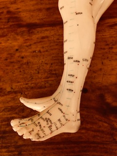 The channels and acupuncture points of the lower outer leg are visible and labeled on an acupuncture model doll's left foot with the grain of a wooden table in the background