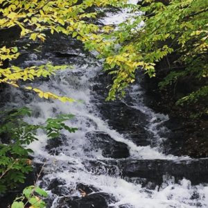 Yellow and green birch leaves add color to a white waterfall cascading over dark bedrock